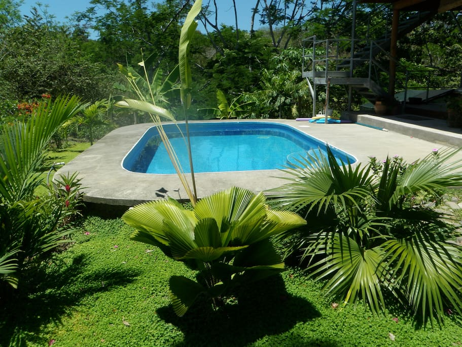 Pool in fron yard with lush tropical garden