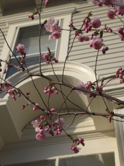 Front Door with Cherry Blossoms!