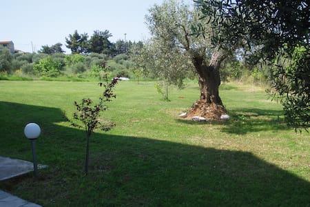 ελαιωνας--olive trees place - Chalkidiki - House