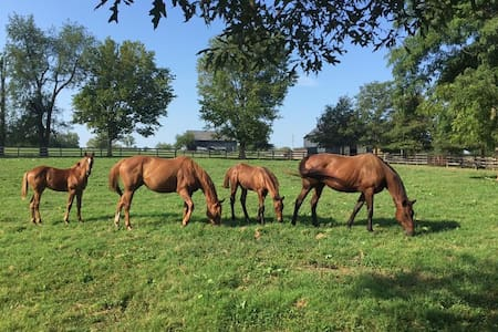 Horse Lover's Dream Serene Studio - Nicholasville - Apartment