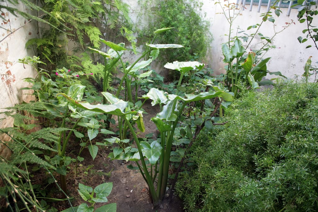 Different botanical species