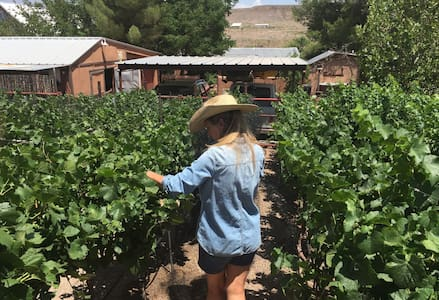 Cowboy Casita in the Heart of a Vineyard - Bungalo