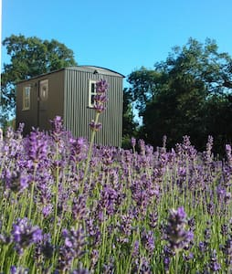 Glamping, Shepherds Hut, New Forest - Lymington - Bed & Breakfast