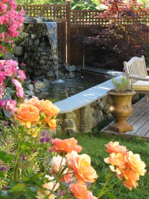 Deck, lawn & pond