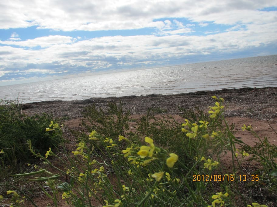 A bird watchers paradise - seaview
