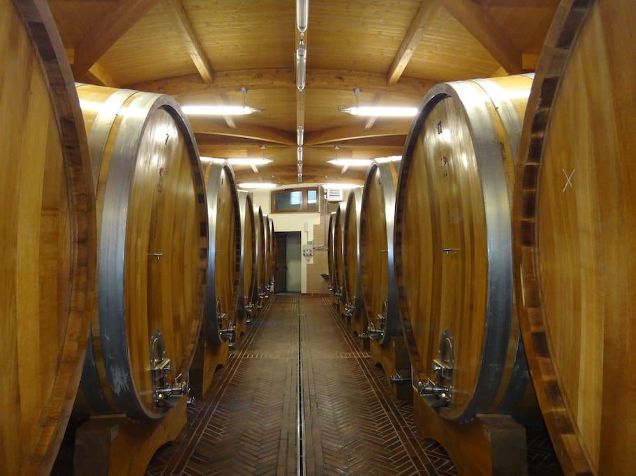 Una delle cantine del vino  Brunello