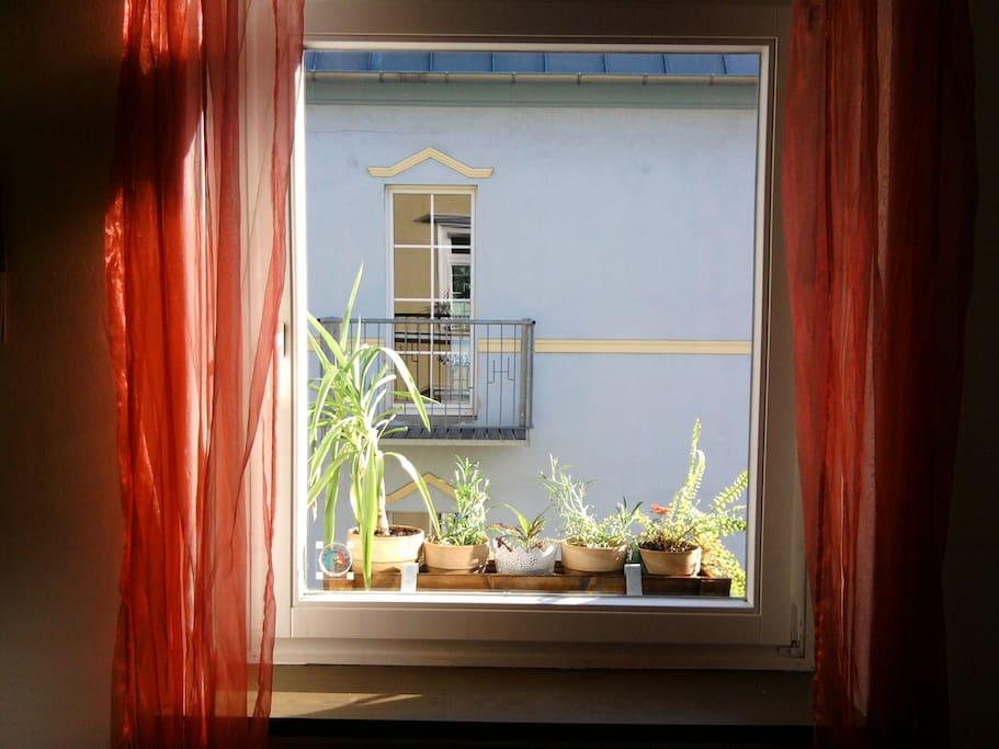Ausblick Küche_kitchen view