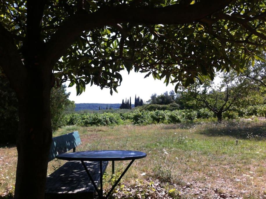 la vue de la terrasse sur vigne et oliveraie