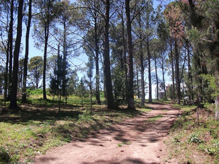 Caminata por el bosque