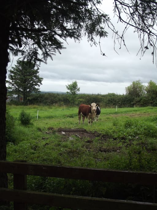 The view from the back window. The farmer next door will sell you freshly laid eggs!