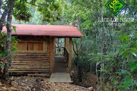 La Casa del Bosque - Cacique Candela - Medellín