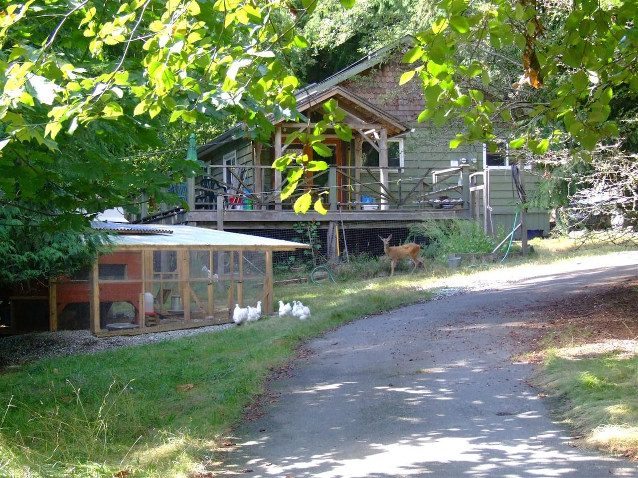 Friendly creatures and your host welcome you to A Country Home in a Woodland B&B