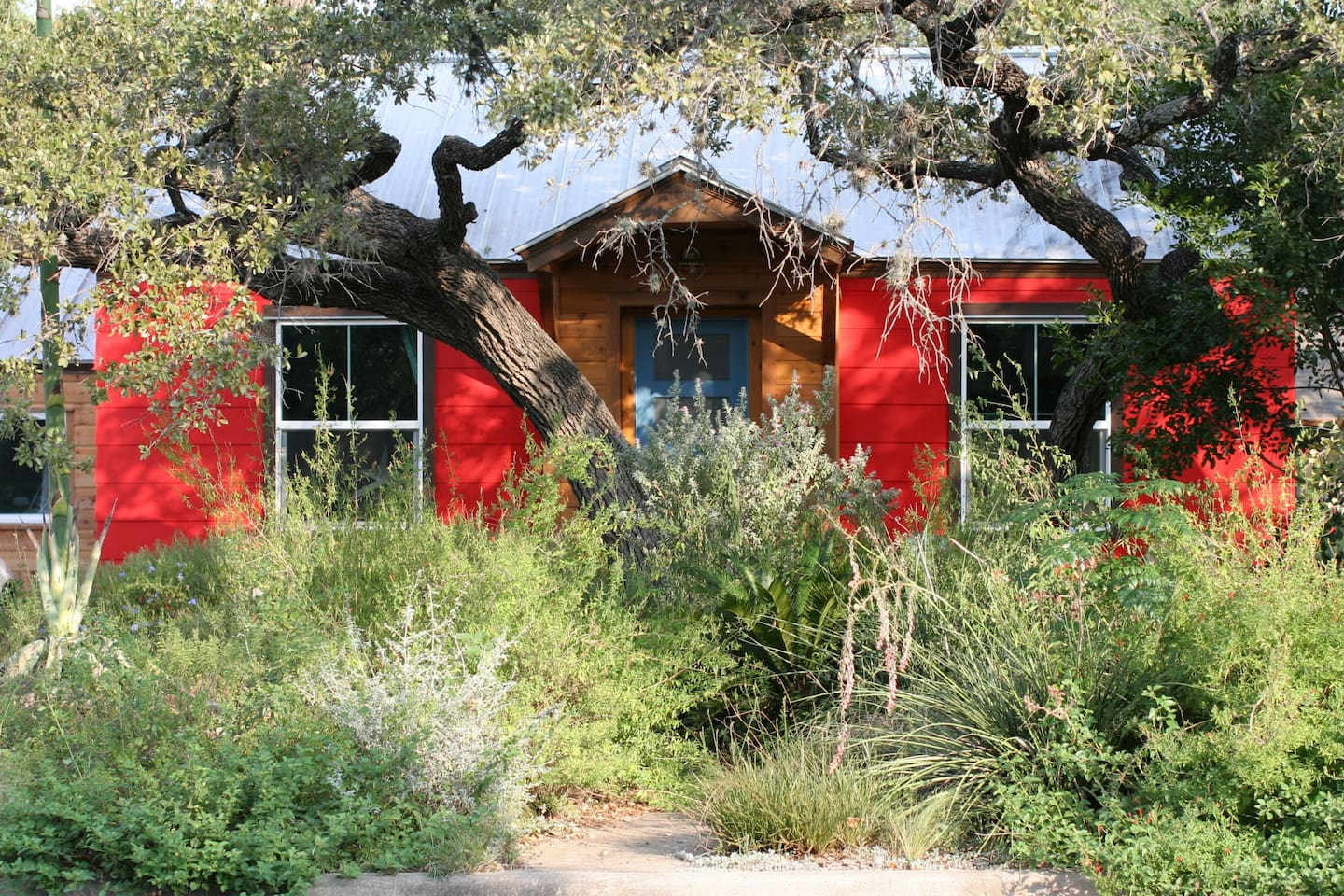 Wild, native garden covers the front lawn of our colorful, South Austin abode.