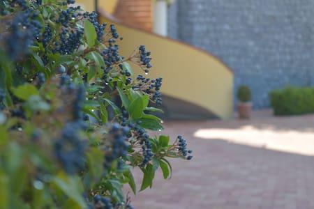 La tavernetta negli ulivi - Lauria - Leilighet