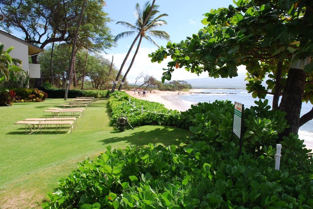 Lawn area in front of condo