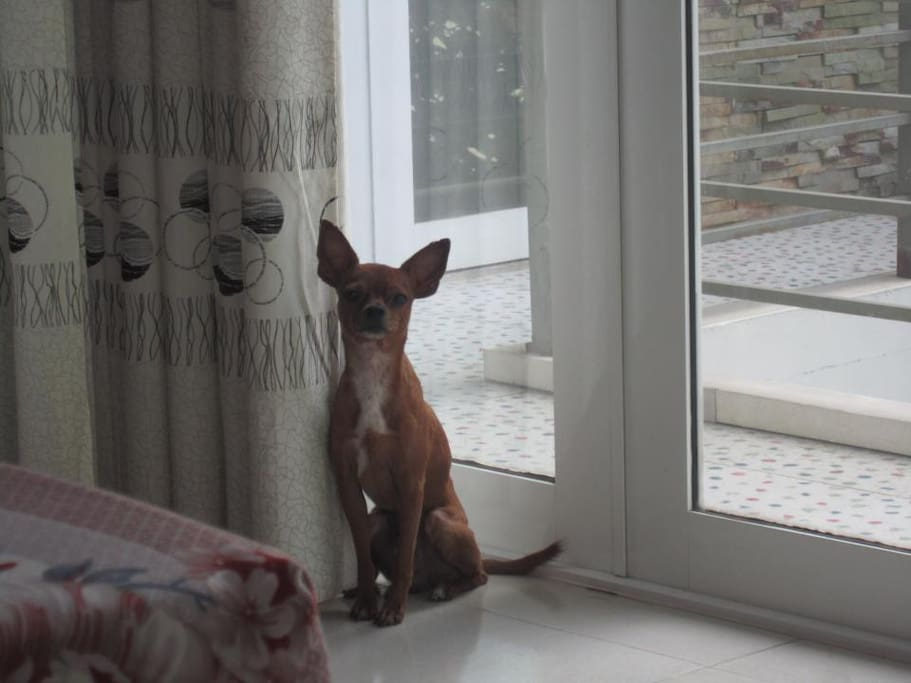 My lovely dog. Of course he is not inside your room :)