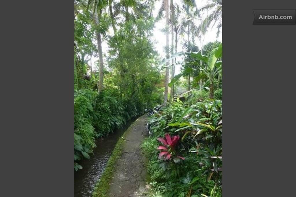 The Enchanted pathway to Mulawarman