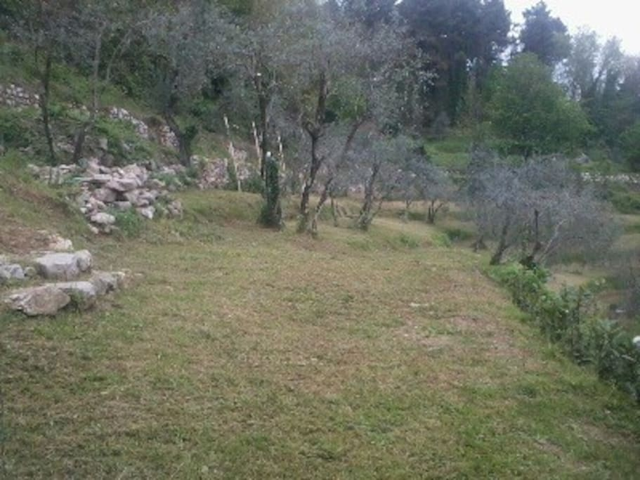 The beautiful garden with our own olive trees.