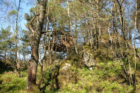 Tree house - Puumaja