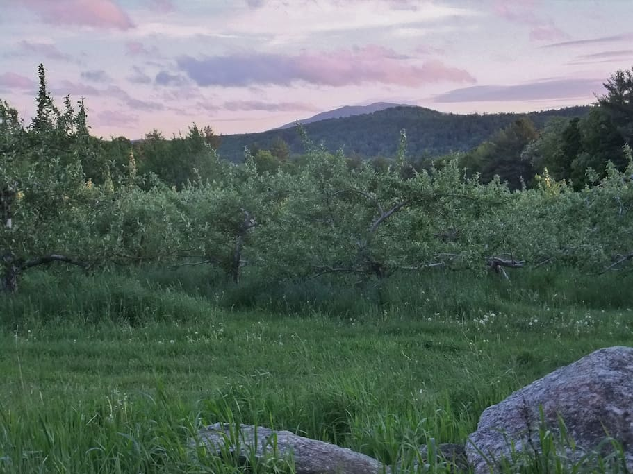 View of Mt Monadnock from Norway Hill @ pick your own apples close by