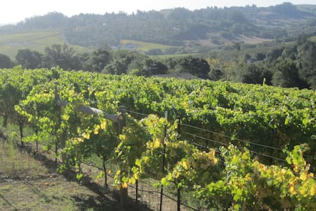 Wine Country Artist Haven - Sebastopol - Bed & Breakfast