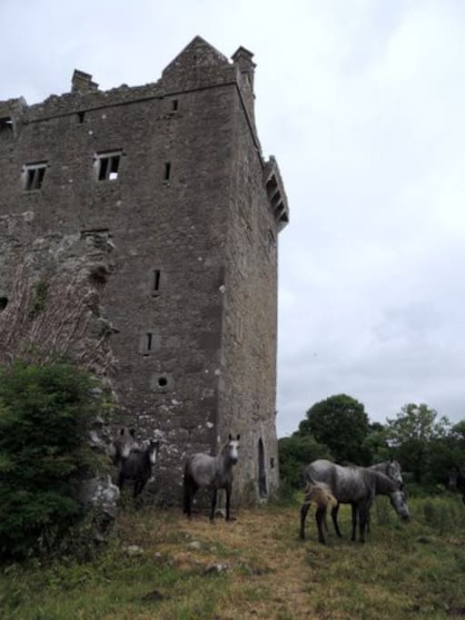 Derryhiveny Castle a few hundred metres from Murrays