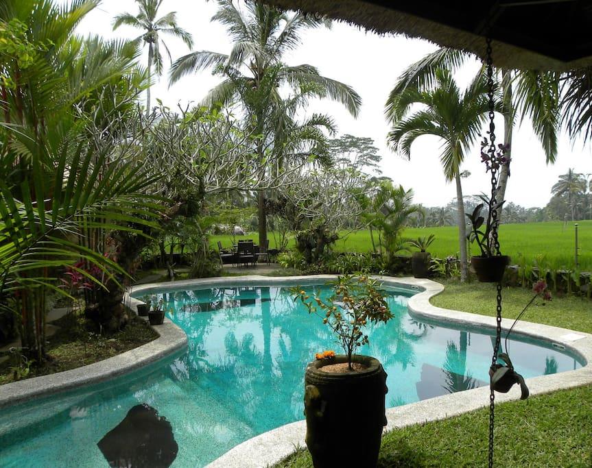 Piscine au milieu d'un jardin tropicale avec vue sur les rizières