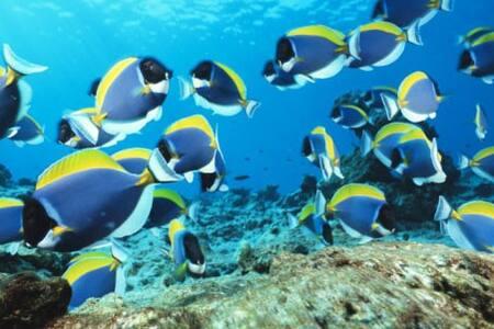Huvadhoo atoll , stay long N cheap