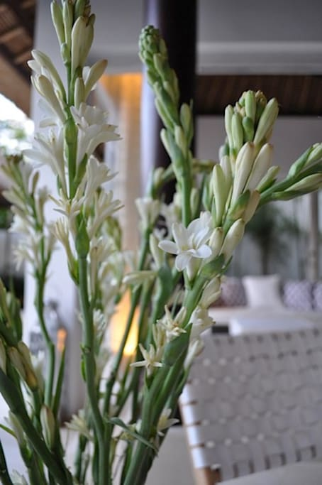 Fresh tuberoses famed for their evening scent