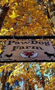 Pawsitive Dognosis Farm and Retreat - Lyman - House