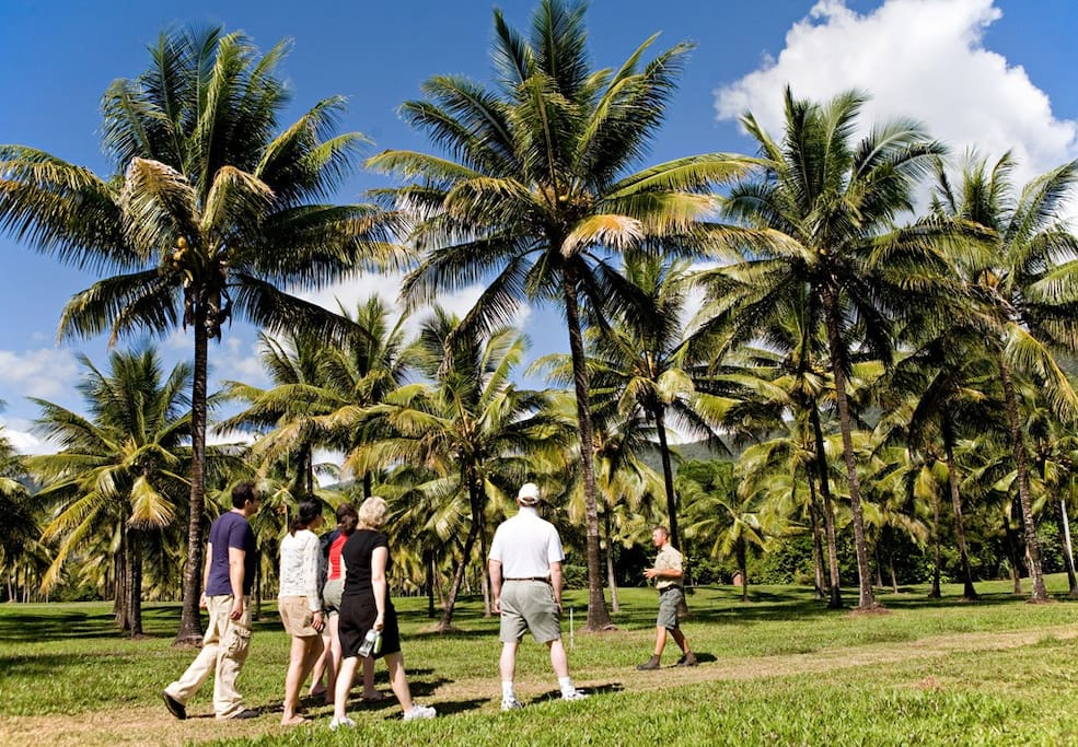 Complimentary onsite guided nature tours including wildlife walks, birdwatching, and a coconut plantation tasting adventure.
