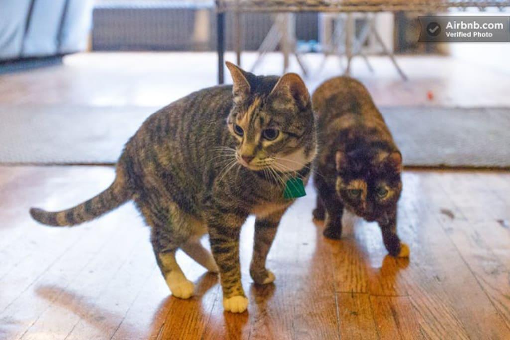 3 lady cats!
