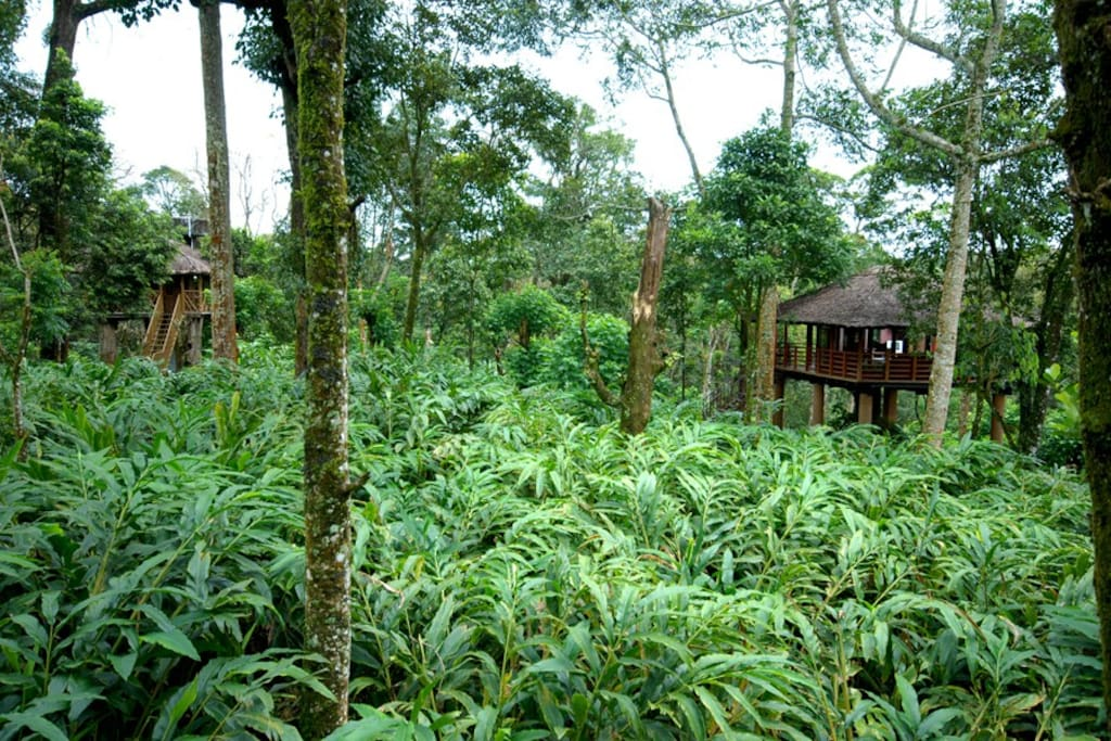 Treehouse in Cardamom Plantation