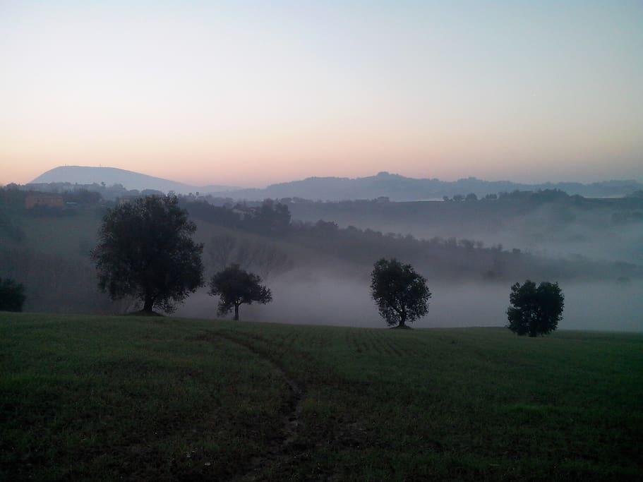 campagna intorno casa, il Monte Conero sullo sfondo