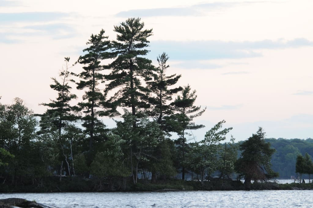 White Pines across our bay