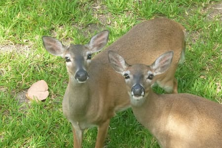 Stay with Key Deer near Key West-Quiet n Relaxed - 獨棟