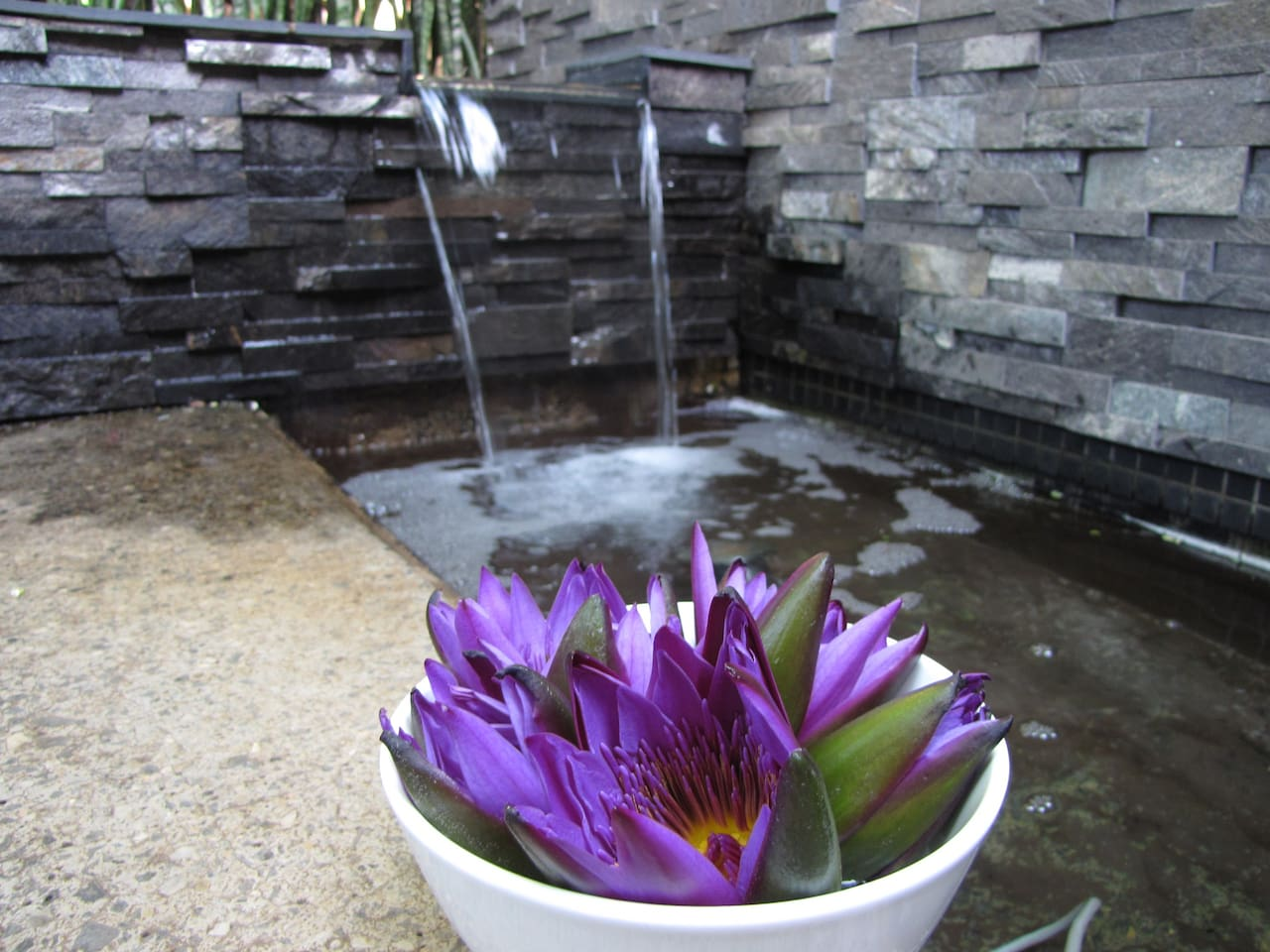 Step into the tropical garden and enjoy the water features