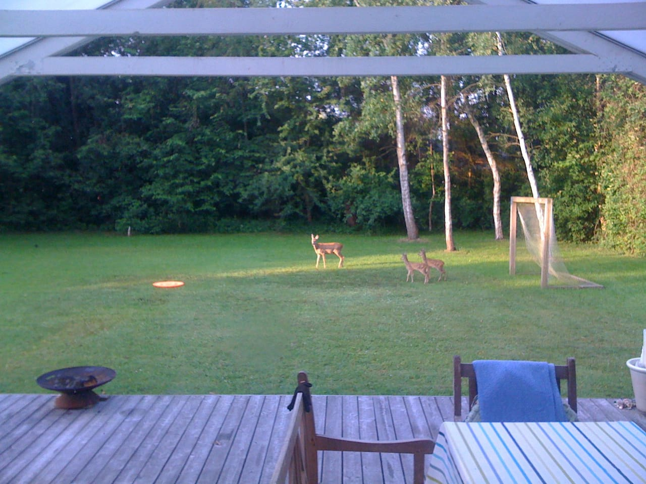 Morning Coffee with Wildlife