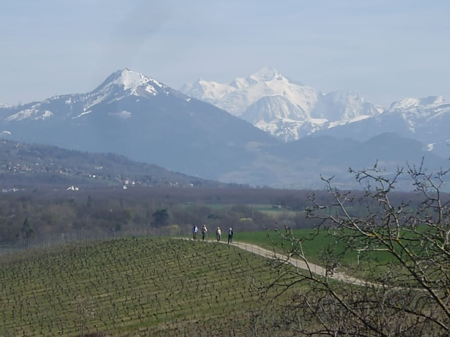 View from attic window over vineyards out the back and Mt. Blanc
