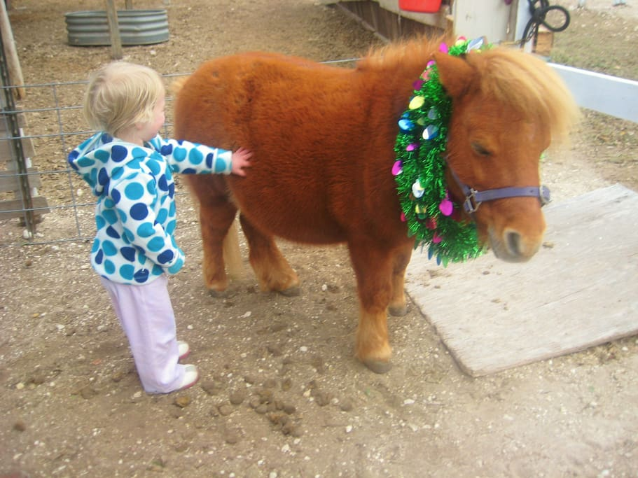 My miniature horse Bucksthot at Christmas. He LOVES kids.