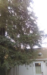 Under the Redwood Tree - Mountain View - Cabin