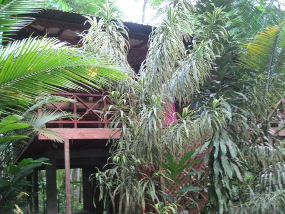 Front view of the jungle house. 2010