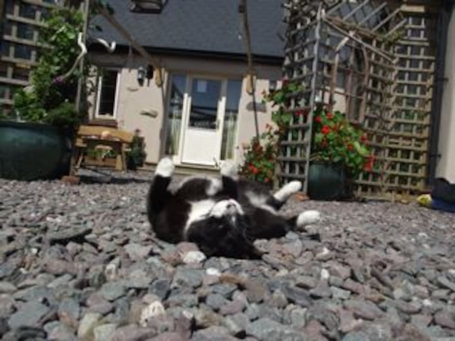 Our very friendly cat totally chilled out