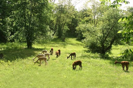 Barron Hill Alpacas Farm Stay Pasture-view - Appartement