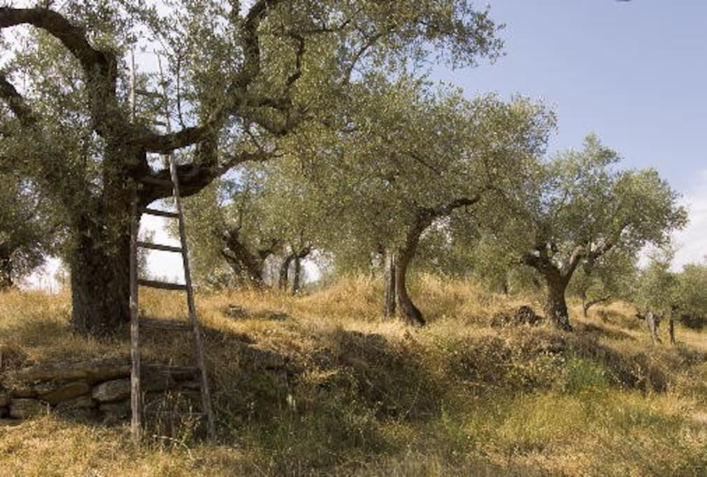 5 acres of Olive grove for quiet relaxing privacy