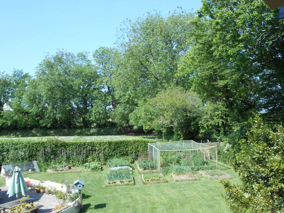 View of back garden and veg patch from Blue room.