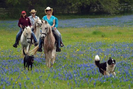 Texas Hill Country B&B Guest Ranch - Szoba reggelivel
