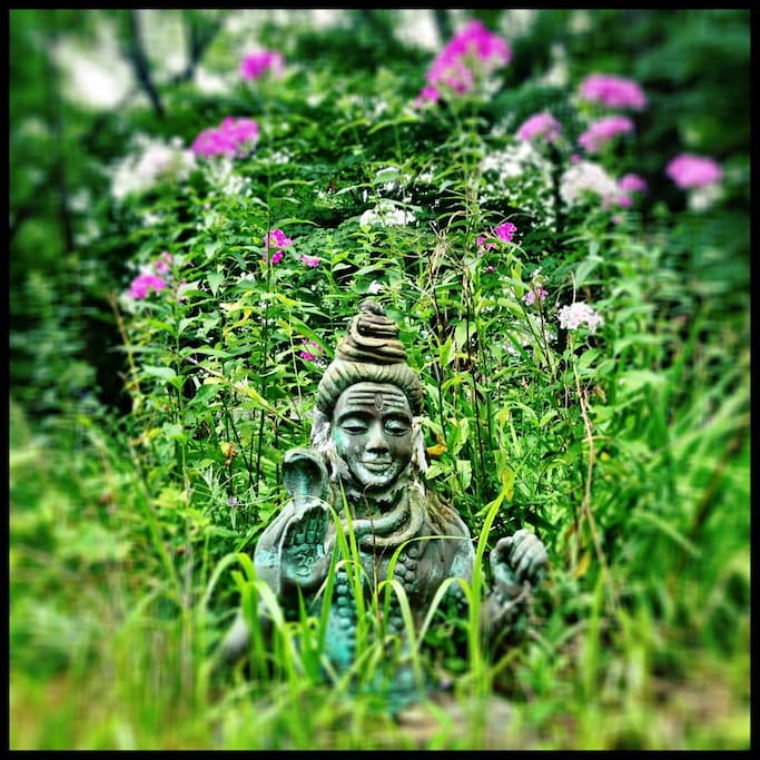 Shiva in the phlox bed at Clover Nook, July