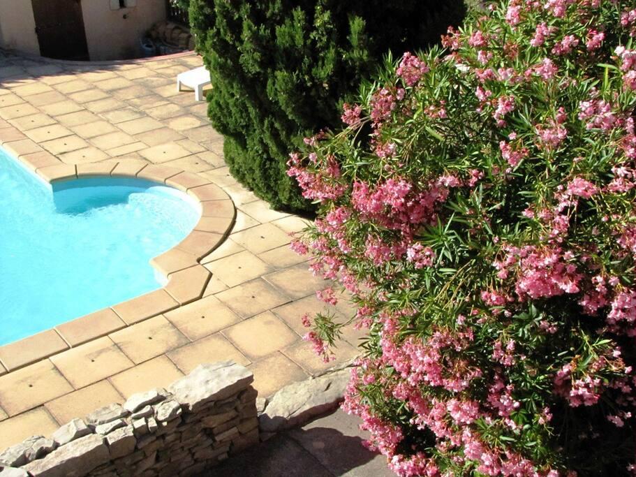 La piscine ouverte à la belle saison