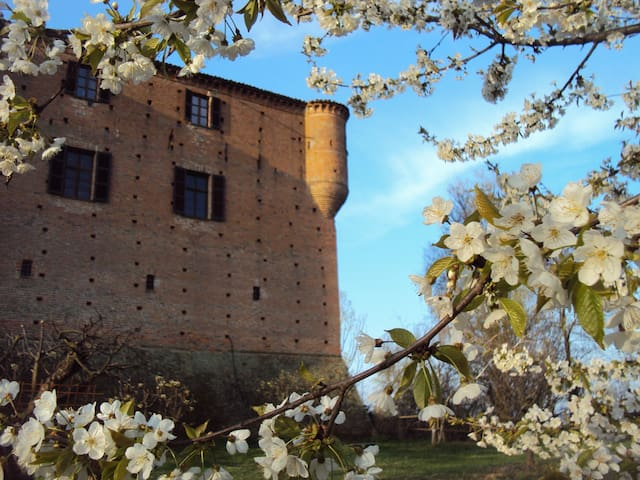 Ancient castle in Monferrato - Castle